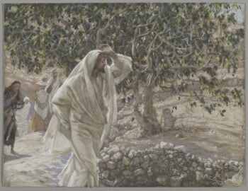 Friday, 9/29/17 Symbolism and The Fig Tree | From Adam to Jesus
