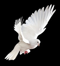 image about Come Holy Spirit Prayer Printable called Catholic Prayers toward the Holy Spirit