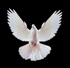 open armed dove